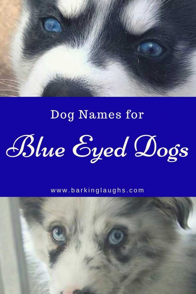 Over 90 Of The Most Hypnotic Blue Eyed Dog Names Blue Eyed Dog