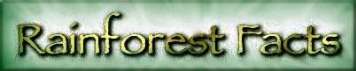 The Disappearing Rainforests   The Wealth of the Rainforest   Rainforest Action
