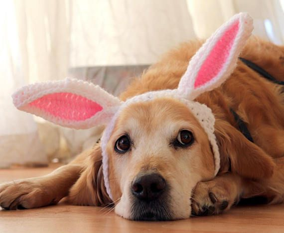 Easter Bunny Ears For Large Dogs