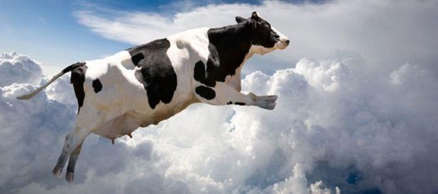 É um passaro? É um avião? Não, é a morte vindo da maneira mais esdrúxula possível! Confira nossa lista de mortes por coisas estranhas caídas do céu