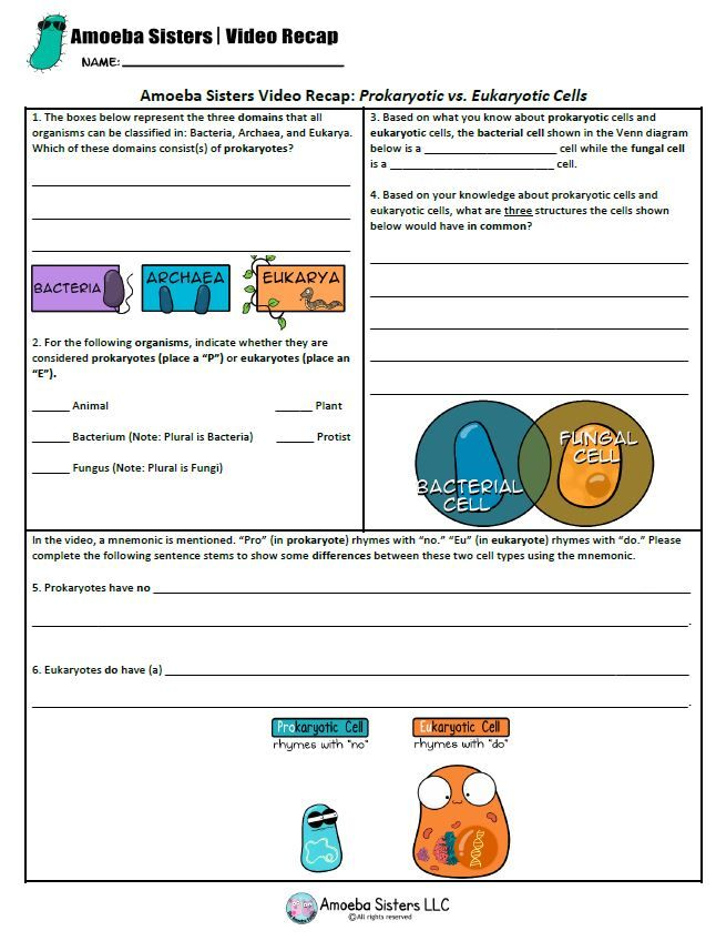Worksheet Amoeba Sisters Llc Answer Key Nature Of Science ...
