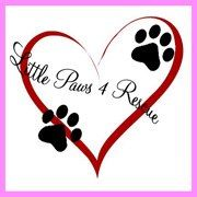 Little Paws 4 Rescue, located in Lacey, WA  Is an non-profit small dog (and…