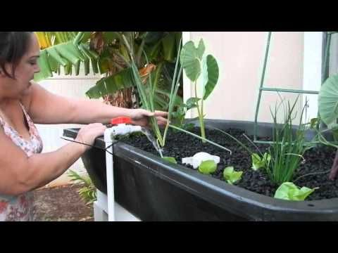 DIY Aquaponics for Beginners 2014, a How To guide to making your first AP system - YouTube