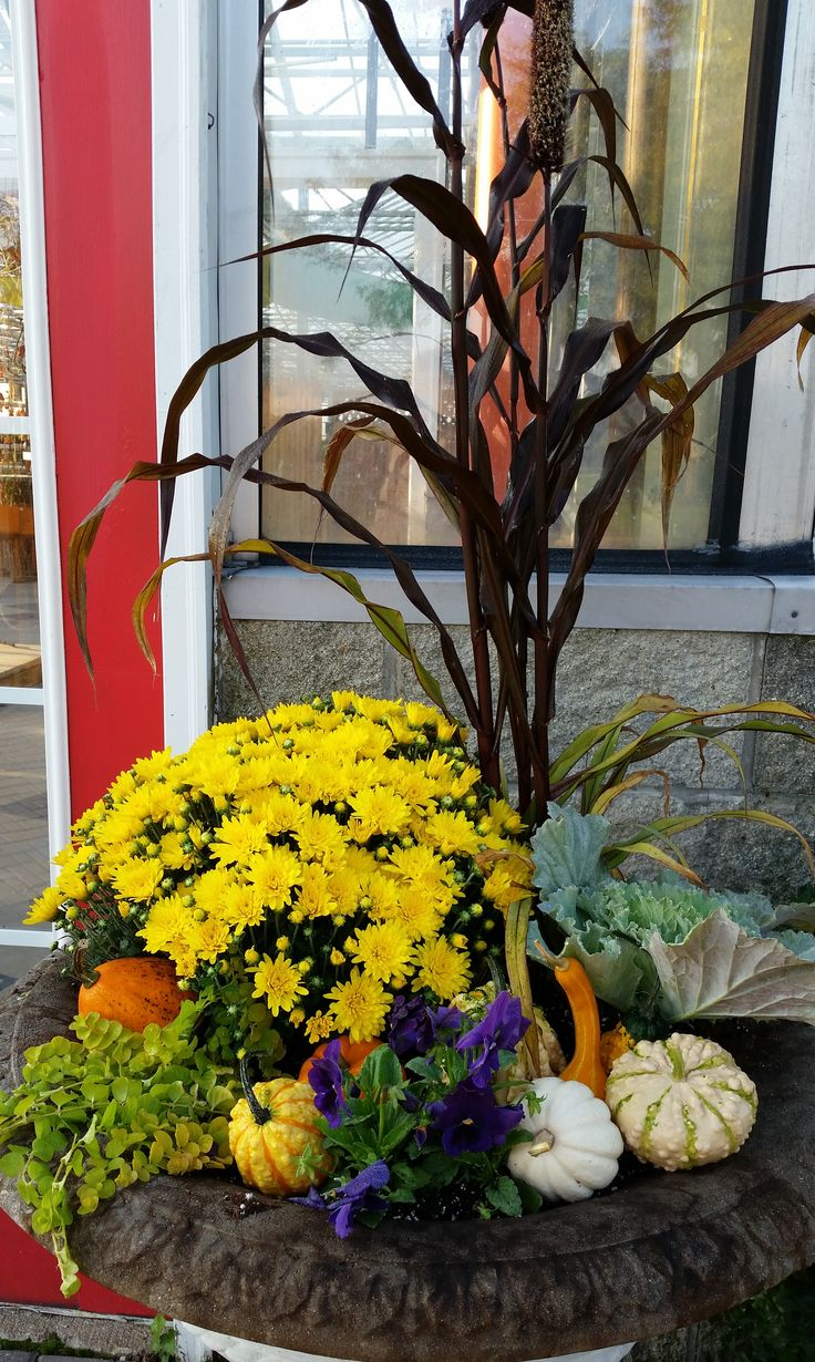 best images about gardens gardens maidenhair front door planters at shady hill fall 2014