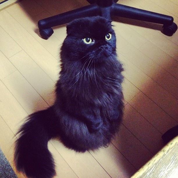 Con mucha pena un homenaje a Miles...que desapareció de Afunalhue :(: De Afunalhue, Cats Meow, Desapareció De, Miles Que Desapareció, Animal Kingdom, Mucha Pena, Treats Alreadi, Very