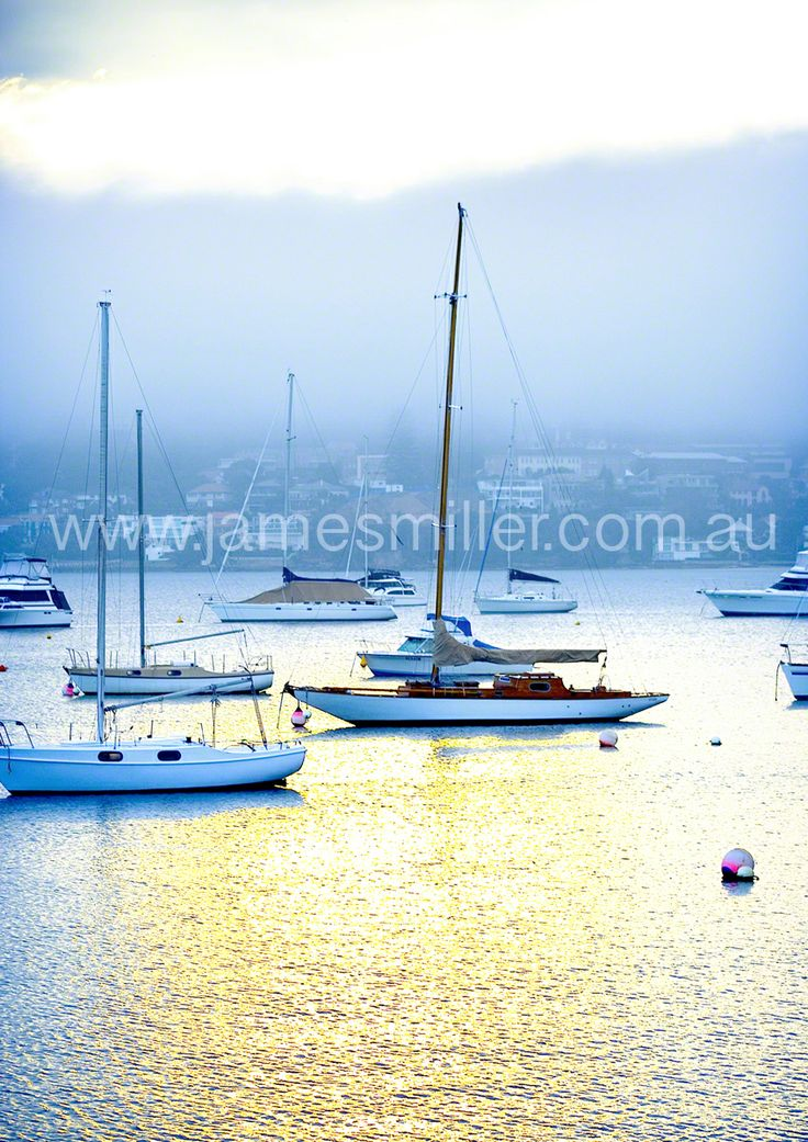 beautiful boats at Rose Bay, Sydney basking  in the sunlight