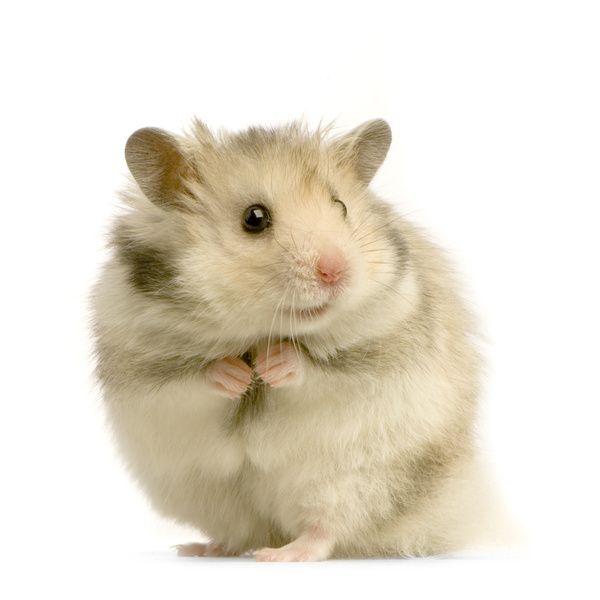 Hamster<3<3