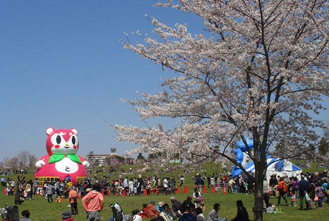 When And Where To See Cherry Blossoms In Tokyo In 2020 The Official Tokyo Travel Guide Go Tokyo Hanami Cherry Blossom Tokyo Travel Guide