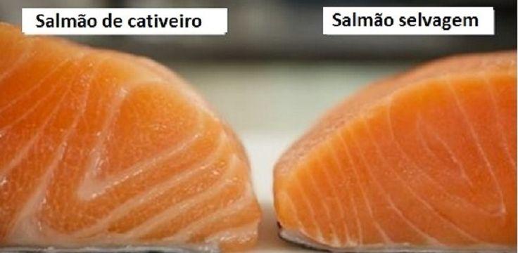 O peixe hoje não é um alimento tão saudável como já foi um dia.Como muitas espécies ficaram raros ou entraram em extinção, e o homem resolveu facilitar o processo de pesca, a alternativa mais conveniente foi a criação de peixes em cativeiro.