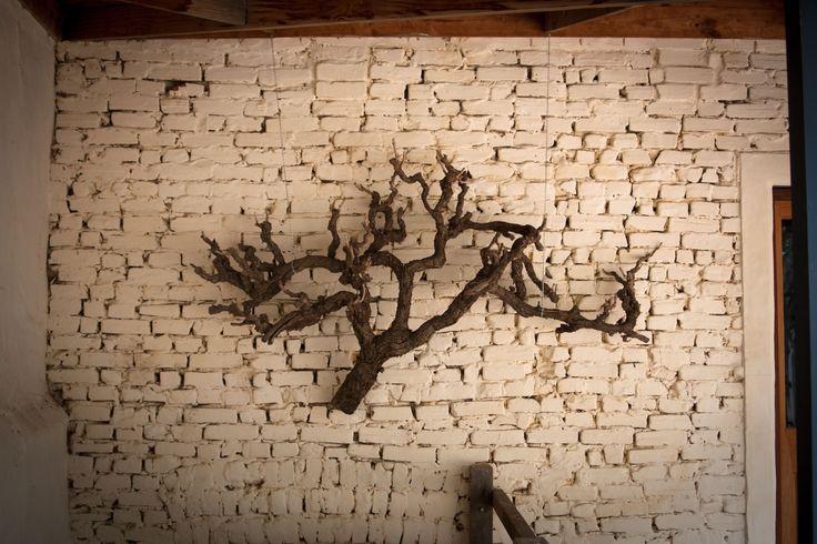 Ancient vine adorning the 1860s butchers shop (now Cellar Door) wall. #barossa #wine #vines #southaustralia #brickwall #rustic