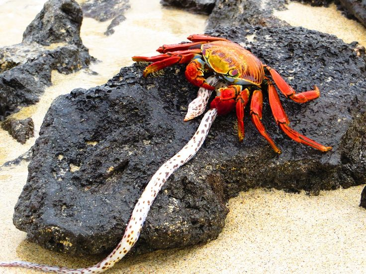 39 Best Images About Galapagos Animals On Pinterest Post