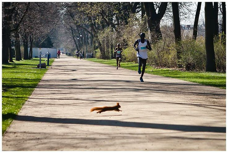 #Marathon Squirrel takes the gold during in #Warsaw, #Poland.