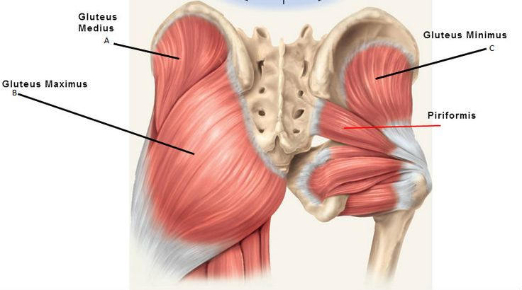 The Big 3 - Your Glute Muscles                                                                                                                                                                                 More
