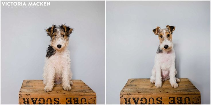 Before/After, Archie's first professional groom!