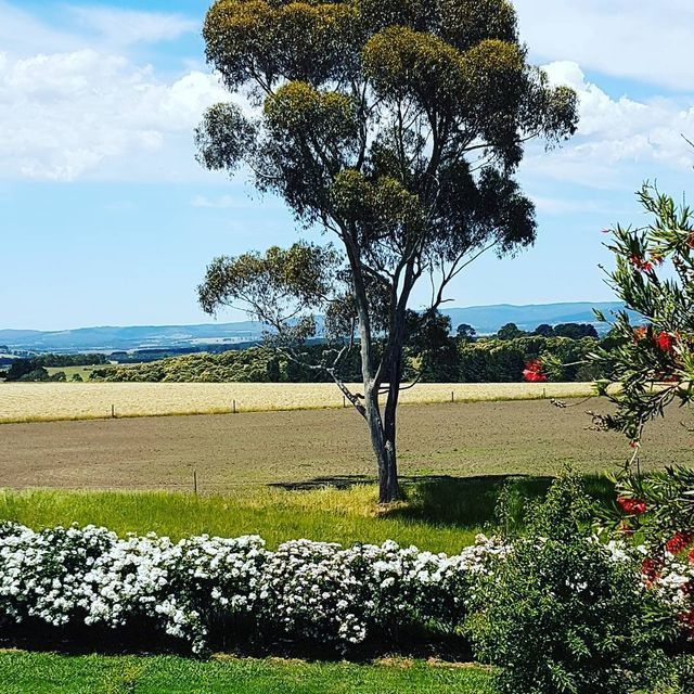 Gutter-Vac Geelong had a beautiful view while servicing a property at Birregurra in Victoria.