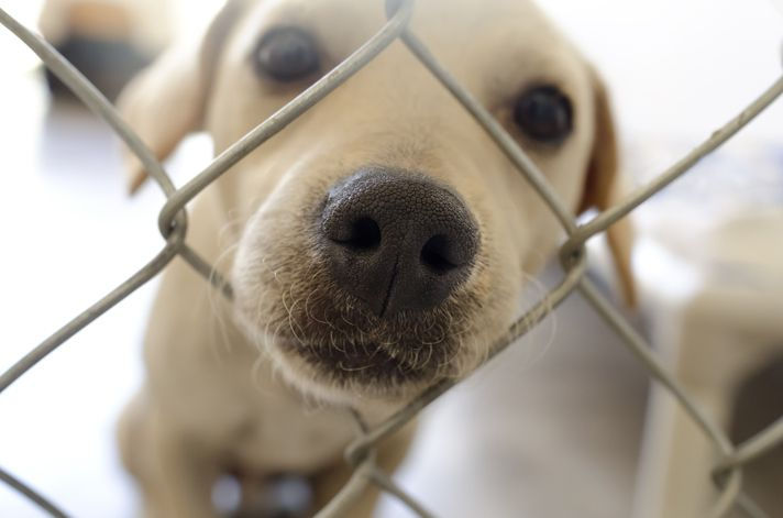 There are so many dogs just waiting to be adopted. Here are a few tips some professionals, including myself, gave on finding the right rescue group. #dogrescue #dogtraining 6 Tips To Help You Find Rescue Dogs For Adoption - Petcha