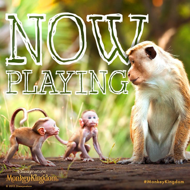 The gang's all here for #MonkeyKingdom, now in theatres! See the movie,