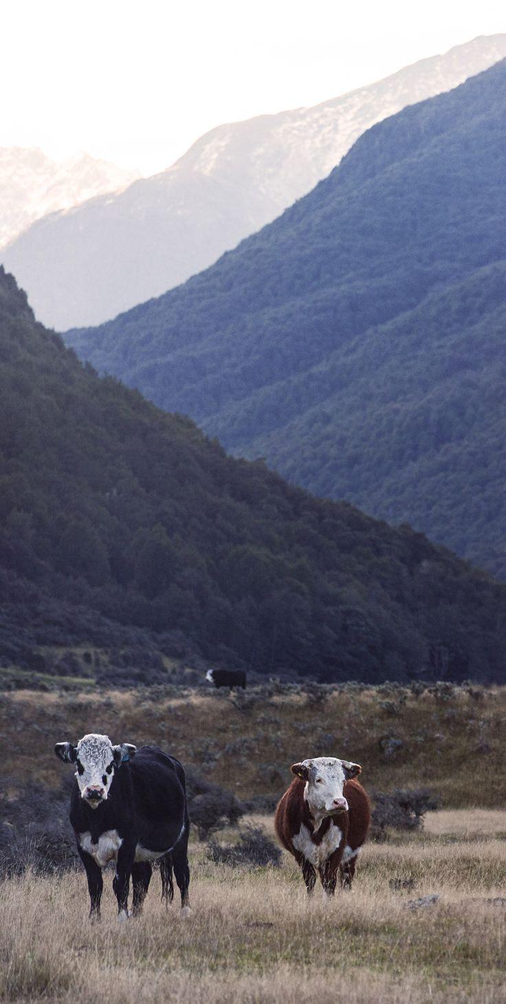 Kepler Track, New Zealand. Photography by Gitta Schermer © Copyright 2012 - 2015 Gitta Schermer. All rights reserved.