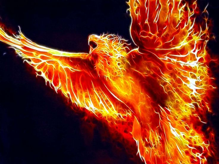 1000+ Images About Phoenix Firebird On Pinterest