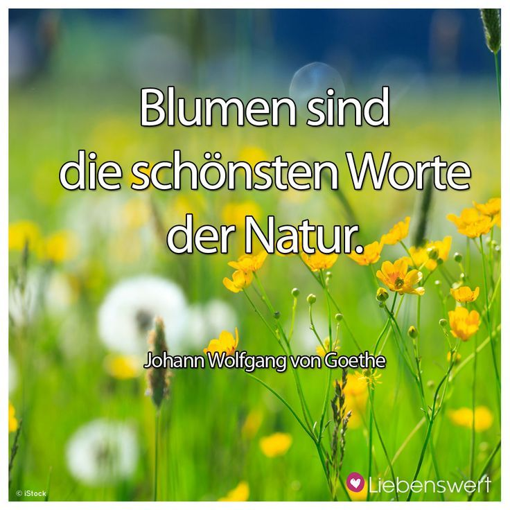 Flowers Are The Most Beautiful Words Of Nature Johann Wolfgang Von Goethe Spruc Lyrics Be Flower Quotes Inspiring Quotes About Life Life Quotes