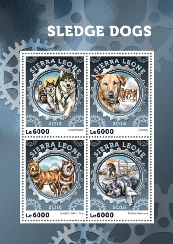 SRL16407a Sledge dogs (Alaskan Husky; Chinook; Canadian Eskimo Dog; Alaskan Malamute)
