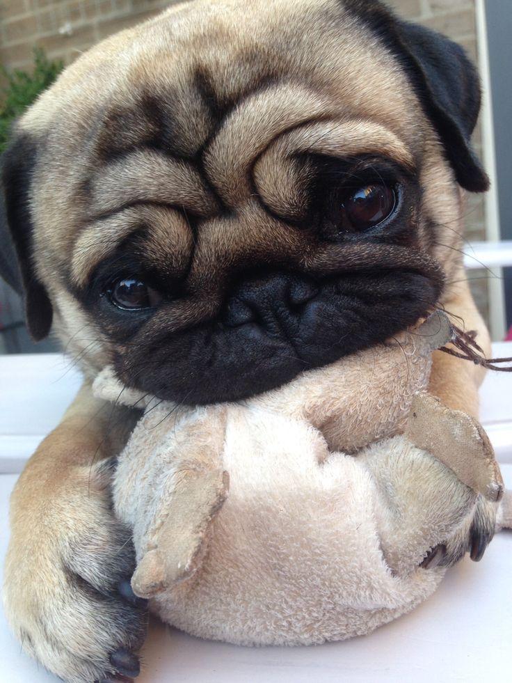 Best 25 Pug Names Ideas On Pinterest Pug Puppies Pugs