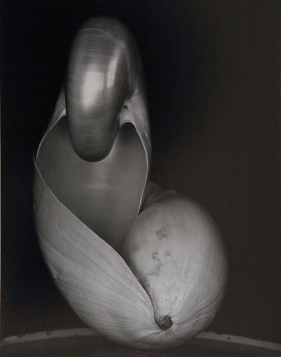 Эдвард Уэстон. Раковина, 1927