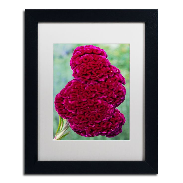 Kurt Shaffer 'Coxcomb Flower' Matted Framed Art