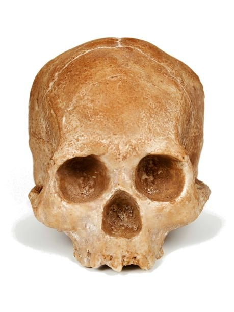 Edible Solid White Chocolate Skull - I definitely know someone who would love this, but in dark chocolate...