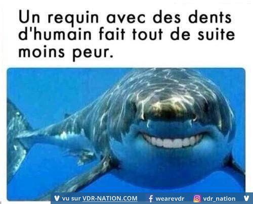 Ce requin c'est la vie!