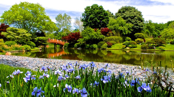 Japanese garden at missouri botanical gardens st louis - Missouri botanical garden st louis mo ...