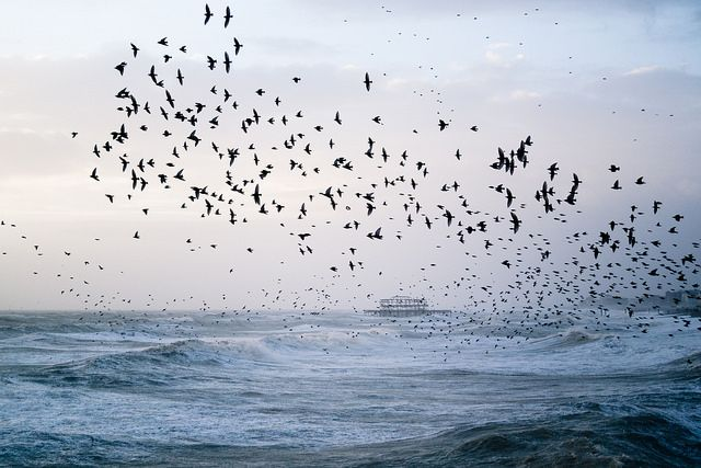 Stormy Seas and Starling Murmuration by Kevin Meredith