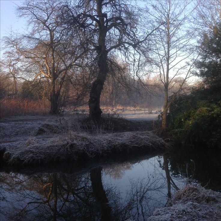 Winter Walk, Meanwood Park, Leeds, December 2016