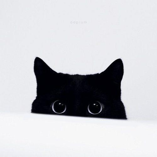 Those eyes! Black cats are lovely.: Black Kitty, Cat Eye, White Fashion, Black White, Big Eye, Peekaboo, Peek A Boo, Blackcat, Black Cat