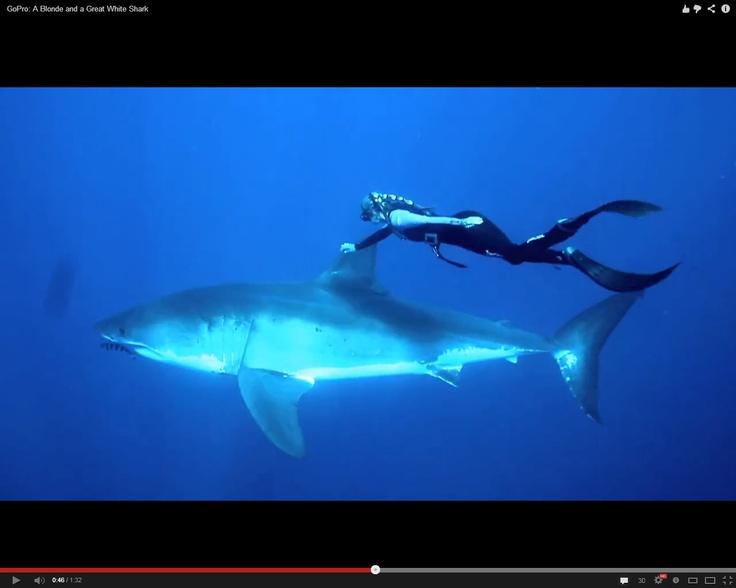 Una mujer nadó junto a un gran tiburón blanco