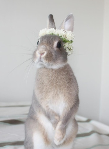 Bunny With Flower Crown Bunny Pinterest Bunnies