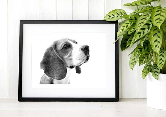 TITLE: Monochrome Millie  This listing is for an unmounted and unframed open edition print that has been created from our original photography of beautiful Millie the beagle. This image will be printed onto Hahnemuhle Photo Rag paper using pigment inks, giving outstanding print quality