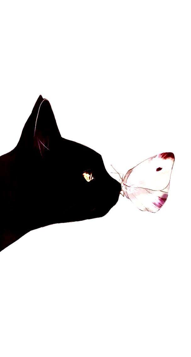 Schwarze Katze, Miau, Kätzchen, Schmetterling, Katzenaugen   – •Hintergrundbilder• – #Hintergrundbilder #Kätzchen #katze #Katzenaugen