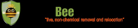 Queen Bee Removal - Why it is important to remove a live hive.