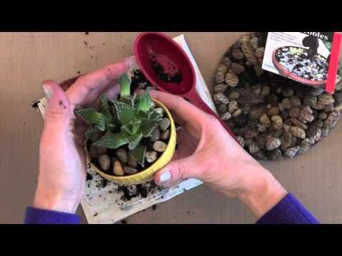TWO Videos: Succulent Planting + Gift Tags | Jennifer McGuire Ink
