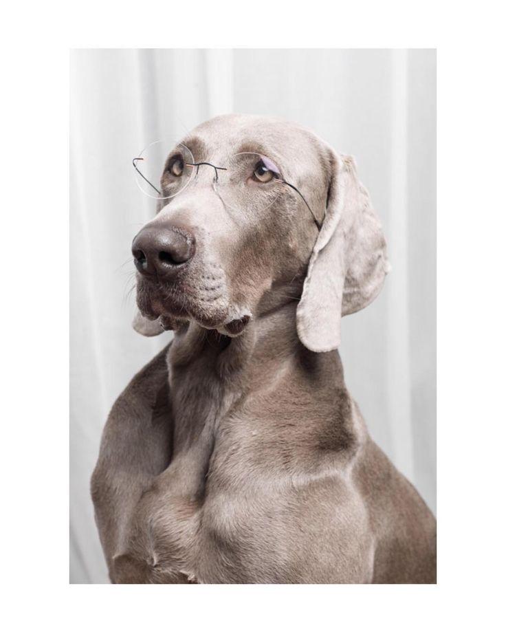 324 отметок «Нравится», 6 комментариев — Silhouette Eyewear (@silhouetteeyewear) в Instagram: «Woof Woof: Happy international dog day with #silhouetteeyewear ! (Copyright: @ooom_magazine)…»
