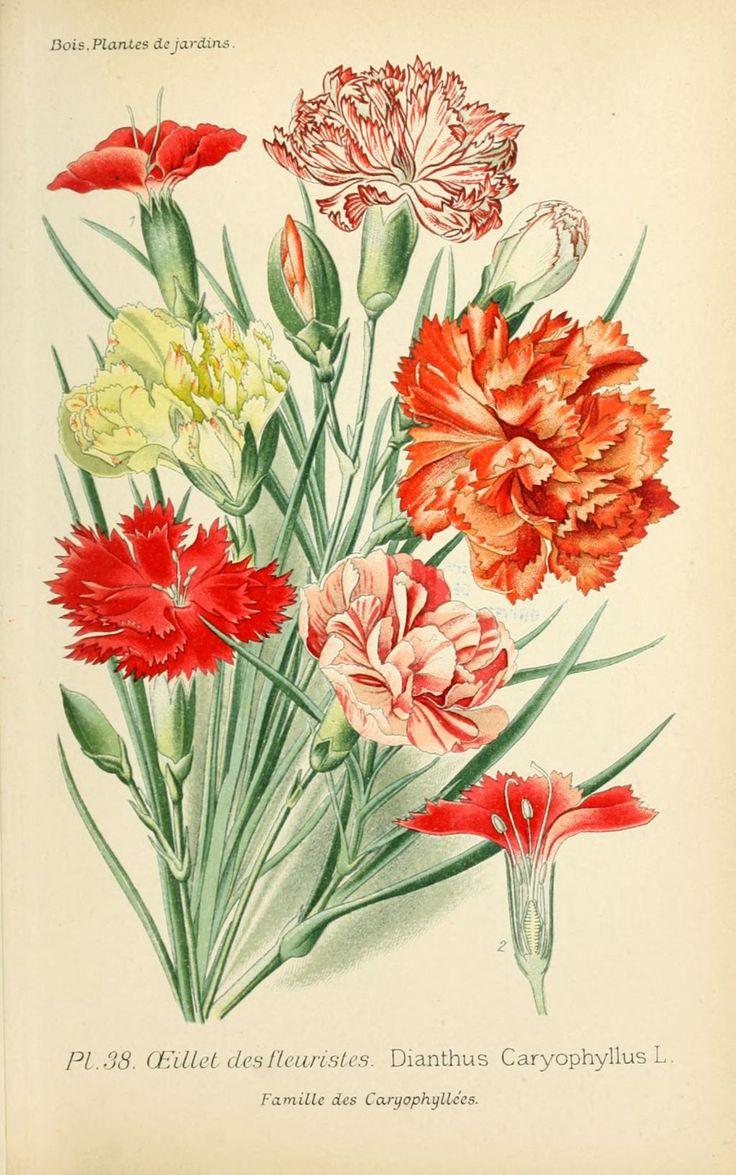 25 best ideas about dessin fleur on pinterest comment - Dessin de jardin ...