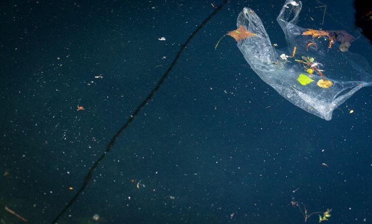 Jonge vissen (baarzen) die worden blootgesteld aan hoge concentraties microplastic blijken daar graag van te eten. Liever dan van hun natuurlijke voeding.