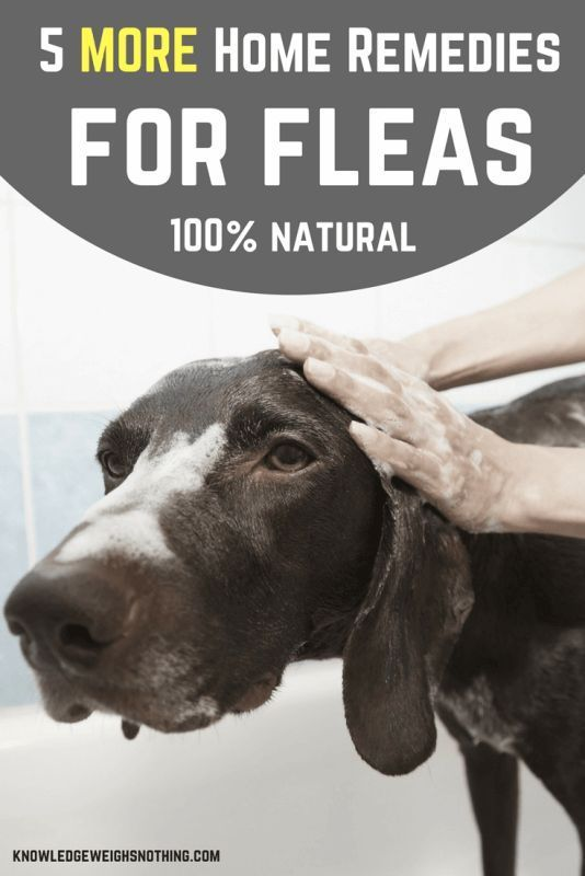 5 MORE Natural Home Remedies For Fleas