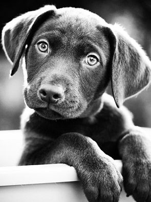 I just said this morning I wanted a cute puppy face to wake me up!