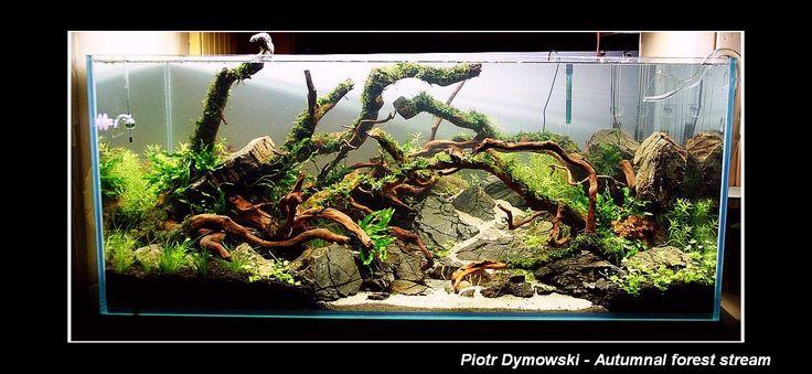 Dzielmy się Pasją: 6. Akwarium Piotra Dymowskiego Autumnal forest stream 360 l