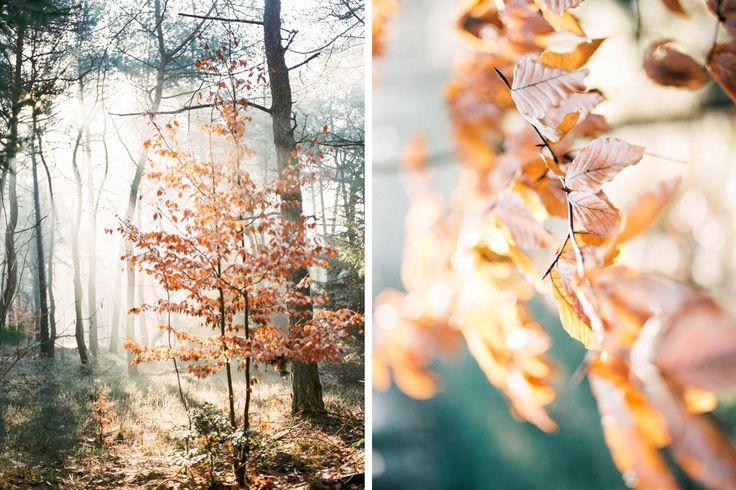 #Fog #Analog #Drenthe #Fall