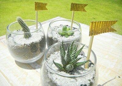 Decoración y recordatorios de cactus y suculentas