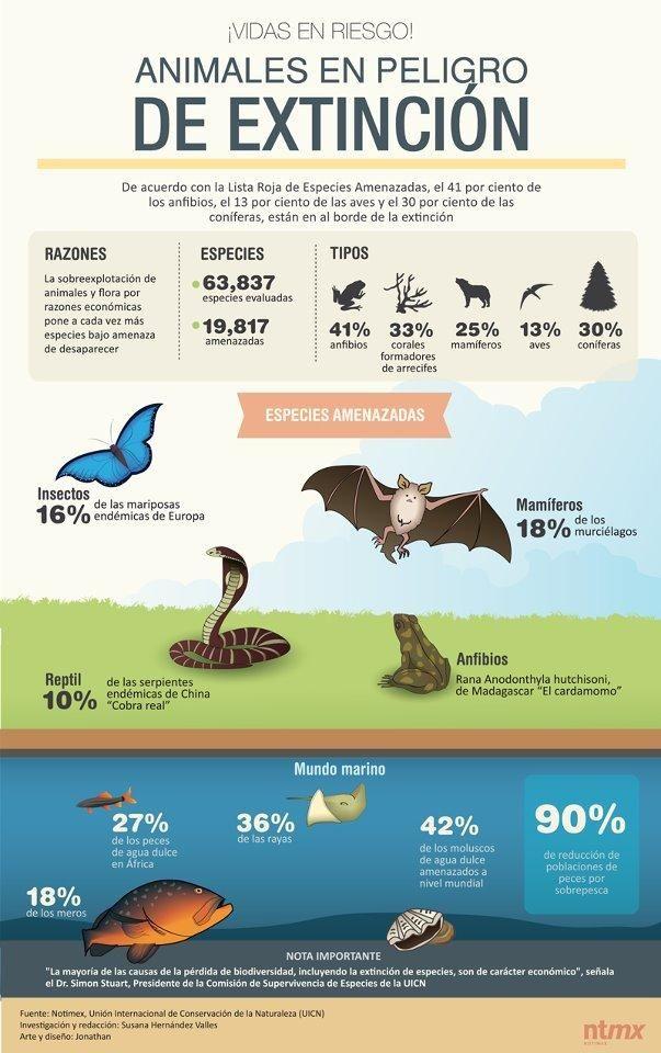 infografía, infografías, animales peligro extinción, especies peligro extinción, que animales están en peligro de extinción, razones desaparición animales