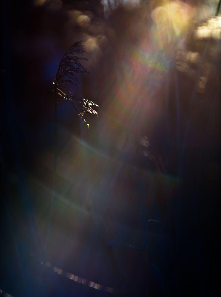 Lens-Flare-Canon-300.jpg (2912×3914)